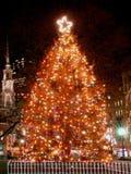 波士顿圣诞节s结构树 库存照片