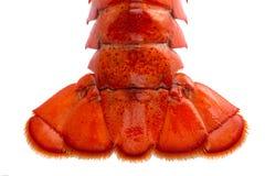 波士顿在白色隔绝的龙虾仁 免版税库存照片