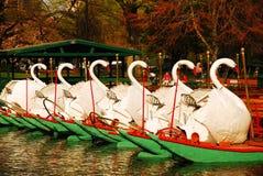 波士顿天鹅小船  库存照片