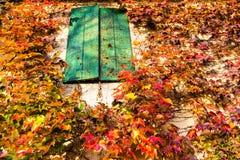 波士顿常春藤和老窗口 免版税库存图片