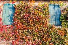波士顿常春藤和老窗口 库存照片
