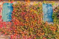 波士顿常春藤和老窗口 图库摄影