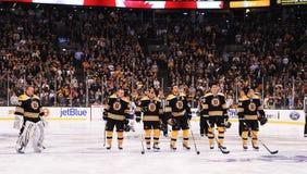 波士顿熊 库存图片
