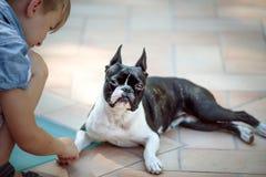 波士顿狗和男孩 免版税图库摄影