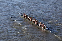 波士顿- 2016年10月23日:一束大学在查尔斯赛船会妇女的大学EightsMiddlebury头赛跑  库存图片