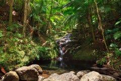 波多黎各密林小瀑布 库存照片