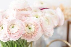 波斯毛茛 束淡粉红的毛茛属开花轻的背景 在桃红色葡萄酒木桌上的玻璃花瓶 免版税库存照片