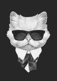 波斯猫画象在衣服的 库存图片