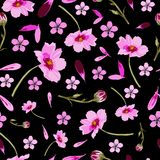 波斯菊和悬钩子花在绽放,无缝的重复样式 向量例证