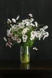 波斯菊开花在玻璃花瓶束的花束在黑暗的背景 库存照片