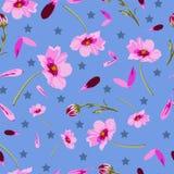 波斯菊花和星-在绽放,无缝的重复样式的花 库存例证