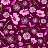 波斯菊花和玫瑰在褐红的背景花在绽放,无缝的重复样式 向量例证
