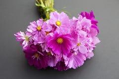 波斯菊花粉红色 库存照片