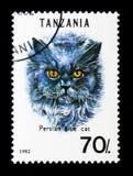 波斯蓝色猫属silvestris catus,猫serie,大约1992年 免版税库存照片