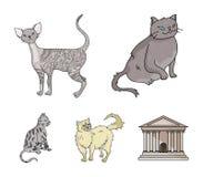 波斯,康沃尔rex和其他种类 猫品种在动画片样式传染媒介标志库存设置了汇集象 免版税库存图片