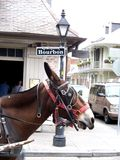 波旁酒骡子新奥尔良符号街道 免版税库存照片