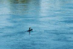 波洛茨克,白俄罗斯 训练在皮船的人们在河 库存图片