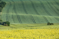 波浪农业领域 免版税库存图片