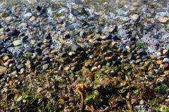 波浪在一个多岩石的海滩留下一些海草 免版税库存照片