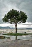 波浪在加尔达湖的堤防打破在风暴期间并且倾吐一棵偏僻的树 免版税库存图片