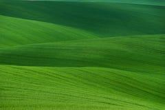 波浪在绿色的夏天农村风景 自然绿色背景纹理 绿色moravian庄稼的春天波浪起伏的领域 免版税库存照片