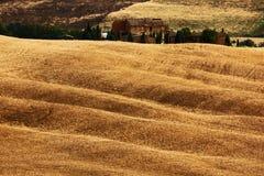 波浪小丘播种与房子的领域,农业风景,自然地毯,托斯卡纳,意大利 免版税库存图片