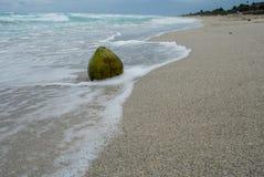 波浪洗涤的椰子说谎在沙子 库存照片