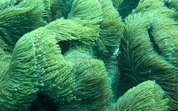 波浪珊瑚 图库摄影