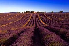 波浪起伏的紫色淡紫色领域 图库摄影