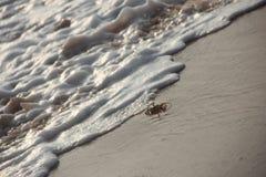波浪追逐的海滩螃蟹 免版税库存照片