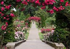 波特兰俄勒冈玫瑰园 免版税库存照片