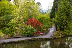 波特兰` s克里斯特尔里弗杜鹃花庭院 免版税库存照片