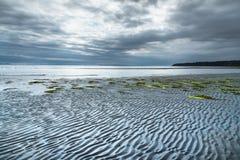 波纹和海草在沙滩处于低潮中在晚上与剧烈的暴风云在天空 库存图片