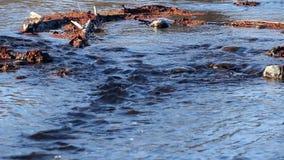 波纹在水中当在岩石的河流程 股票录像