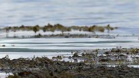 波纹海草海湾苏格兰HD 影视素材
