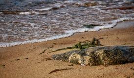 波罗地的石海岸 库存图片