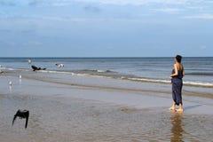 波罗的海、妇女走沿海滩的和哺养的白色g 免版税库存图片