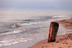 波罗的海岸和海滩与一个干燥树干在期间 库存照片