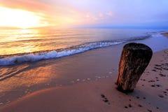波罗的海岸和海滩与一个干燥树干在期间 免版税库存图片