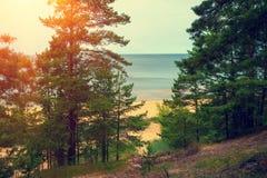 波罗的海海岸 免版税库存照片