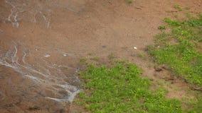 泥和下雨 库存照片