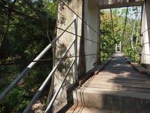 水泥桥梁在热带森林里 库存照片