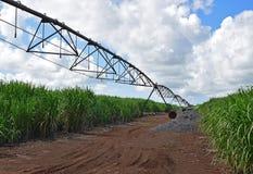 泥泞的与美好的天气的路介于中间的甘蔗种植园领域 免版税库存图片
