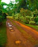 泥泞的乡下公路在热带 库存图片