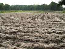 泥泞的农田 免版税库存照片