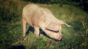 泥泞的口鼻部 免版税库存照片