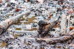 泥泞的地面充满树枝 库存照片