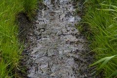 泥泞的垄沟 库存照片