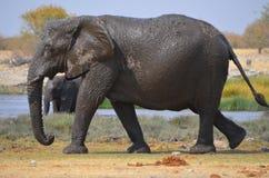 泥泞的大象 库存图片