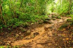 泥泞的密林道路在巴拿马 免版税库存图片